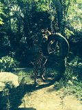 Tigre que juega con el neumático Fotografía de archivo libre de regalías