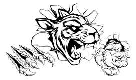 Tigre que rasga a través de la pared Fotos de archivo