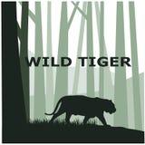 Tigre sauvage photographie stock