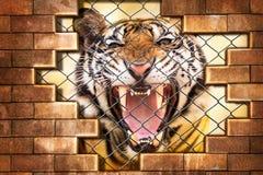 Tigre siberiana in gabbia immagine stock