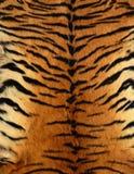 Tigre skin Stock Image