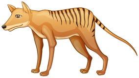 Tigre tasmaniano Imagem de Stock