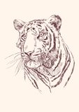Tigre tiré par la main Images libres de droits