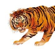 Tigre - vetor Fotos de Stock