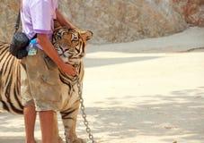 Tigre y encargado de parque zoológico Foto de archivo