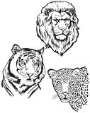 Tigre y leopardo del león Imagen de archivo libre de regalías