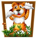 Tigre y marco Imagen de archivo