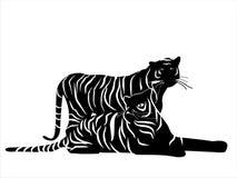 Tigres Imagens de Stock