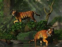 Tigres da pesca ilustração do vetor