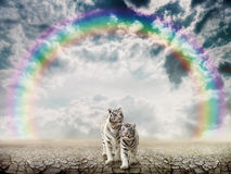 Tigres dans le désert Images libres de droits