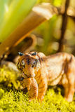 Tigress with cub in teeth. Tiger toy figurine in situation. Stock Photos
