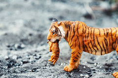 Tigress with cub in teeth. Tiger toy figurine in situation. royalty free stock image
