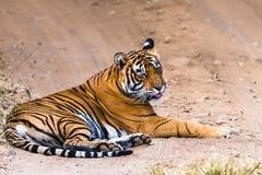 Tigresse royale Noor du Bengale photographie stock libre de droits
