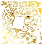 tigrgold Obrazy Royalty Free