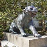 Tigri all'università di Princeton Immagine Stock