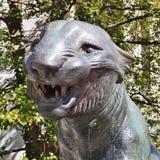 Tigri all'università di Princeton Immagini Stock Libere da Diritti