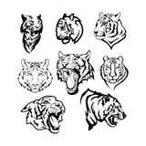 Tigri impostate Immagine Stock Libera da Diritti