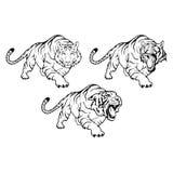 Tigri impostate Immagini Stock Libere da Diritti