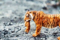 Tigrinna med gröngölingen i tänder Tigerleksakstatyett i läge royaltyfri bild