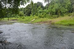 Tiguman rzeka przy barangay Tiguman, Digos miasto, Davao Del Sura, Filipiny obraz stock