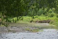 Tiguman rzeka przy barangay Tiguman, Digos miasto, Davao Del Sura, Filipiny obrazy stock