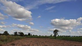 Tijd lapes van rijstlandbouwbedrijf met hemel stock video