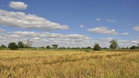 Tijd lapes van rijstlandbouwbedrijf met hemel stock footage