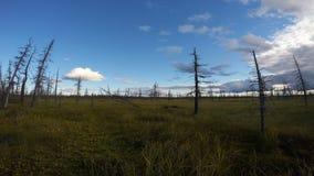 Tijd-tijdspanne fotografie van Siberische taiga, wolken die over de moerassen vliegen stock video