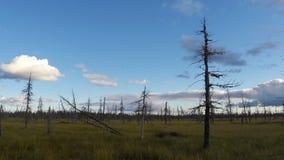 Tijd-tijdspanne fotografie van Siberische taiga, wolken die over de moerassen vliegen stock footage
