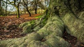 Tijd-tijdspanne van de winterbossen in Engeland stock videobeelden