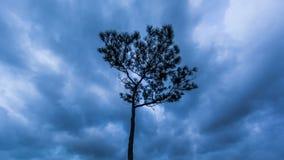 Tijd-tijdspanne van hemel en onweerswolken en boom stock videobeelden