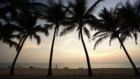 Tijd-tijdspanne van zonsondergang en kokosnotenvoorgrond stock videobeelden