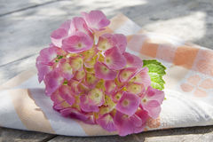 Tijd van hydrangea hortensia's stock afbeelding