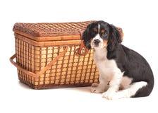Tijd voor een Picknick Stock Foto