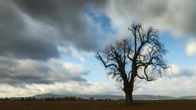 Tijdtijdspanne - bewegende wolken over een paardekastanje in de recente herfst stock footage