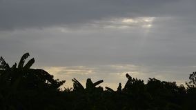 Tijdtijdspanne die van zonstralen bij zonsondergang over de bomen te voorschijn komen stock video