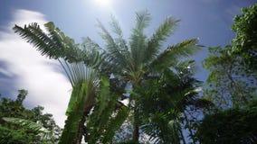 Tijdtijdspanne in mooie tropische tuin stock video