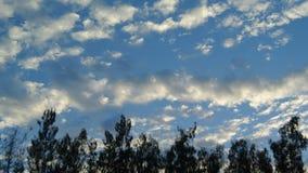 Tijdtijdspanne van aardige wolkenbeweging met het silhouetvoorgrond van de pijnboomboom stock footage