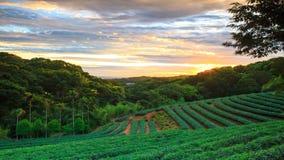 Tijdtijdspanne van de zonsondergang van de theetuin met aardige kleur als achtergrond, Taiwan stock video