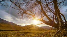 Tijdtijdspanne van doodsboom en droog geel gras bij mountian landschap met wolken en zonstralen Horizontale schuifbeweging stock videobeelden