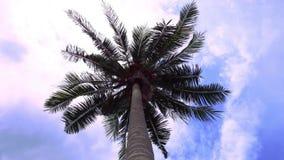 Tijdtijdspanne van groene palm op blauwe hemel stock footage