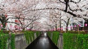 Tijdtijdspanne van het festival van de Kersenbloesem in bloei bij Meguro-Rivier, Tokyo, Japan stock video