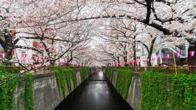 Tijdtijdspanne van het festival van de Kersenbloesem in bloei bij Meguro-Rivier, Tokyo, Japan stock footage