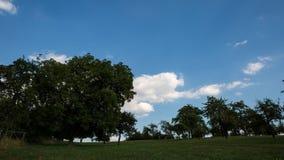 Tijdtijdspanne van landelijk landschap met bomen stock video