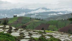 Tijdtijdspanne van rijstterras met berg en wolkenachtergrond stock video