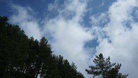 Tijdtijdspanne van witte wolken op blauwe hemel met boombovenkanten stock videobeelden