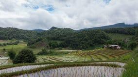 Tijdtijdspanne van witte wolken over rijstterras stock video