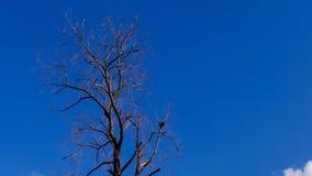 Tijdtijdspanne van wolkenbeweging in blauwe hemel met droge boomvoorgrond stock footage