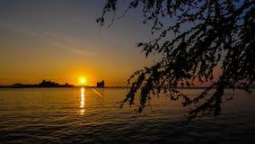 Tijdtijdspanne van zonsondergangschemer bij eilanden met overzees en silhouet van boom stock footage