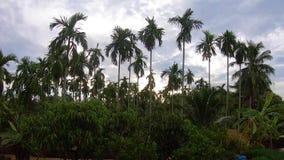 Tijdtijdspanne, Videolengtepalmen op blauwe hemelachtergrond reis, de zomer, vakantie en tropisch stock footage